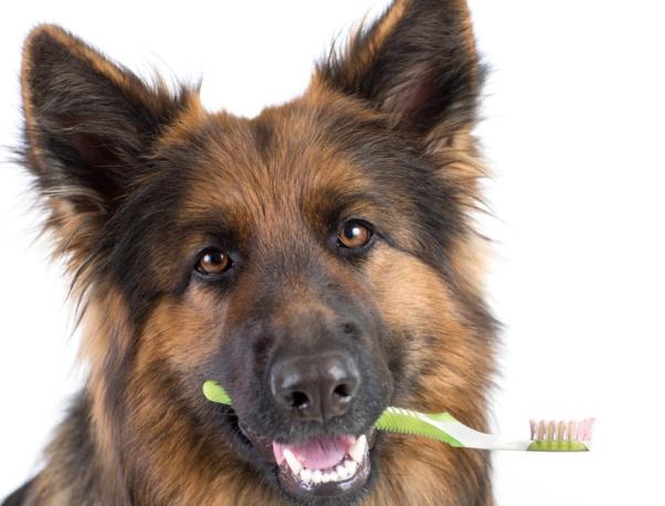 AlmaVetin hammasklinikka palveluksessanne