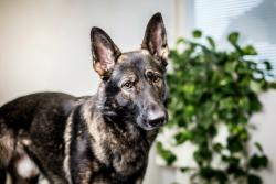 Eläinlääkäripalvelut koirille
