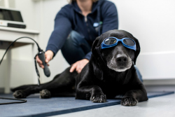 Laserhoito ja -terapia